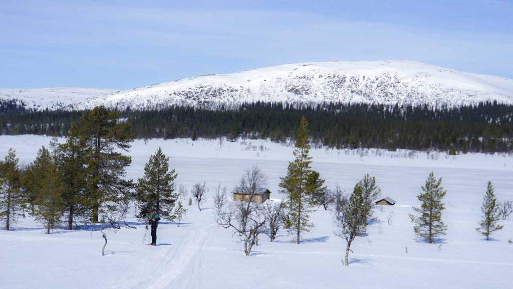 Storhån norr om Slagavallen.